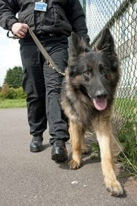 Security Dogs Wallingford